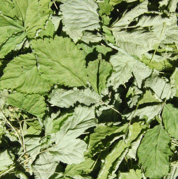 Листья костяники